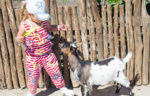 Best goat for pets